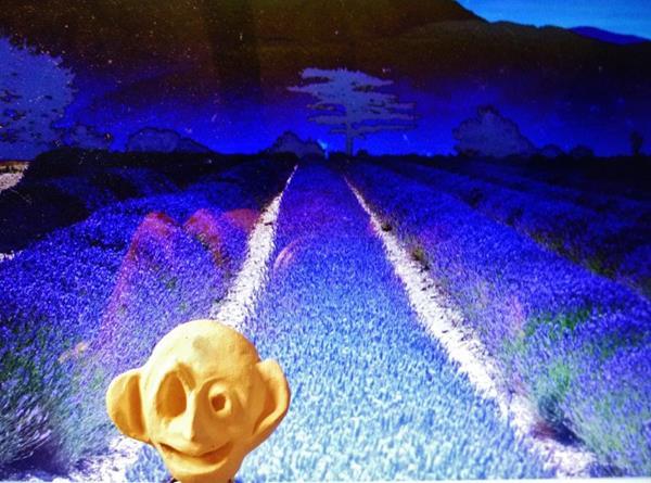 Trau Ma-Nachtaktiver Schelm bei Mondschein im Lavendelfeld (2)